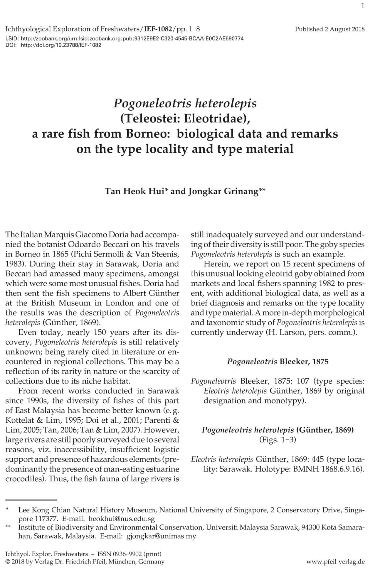 Pogoneleotris heterolepis (Teleostei: Eleotridae), a rare fish from Borneo: biological data and remarks on the type locality and type material