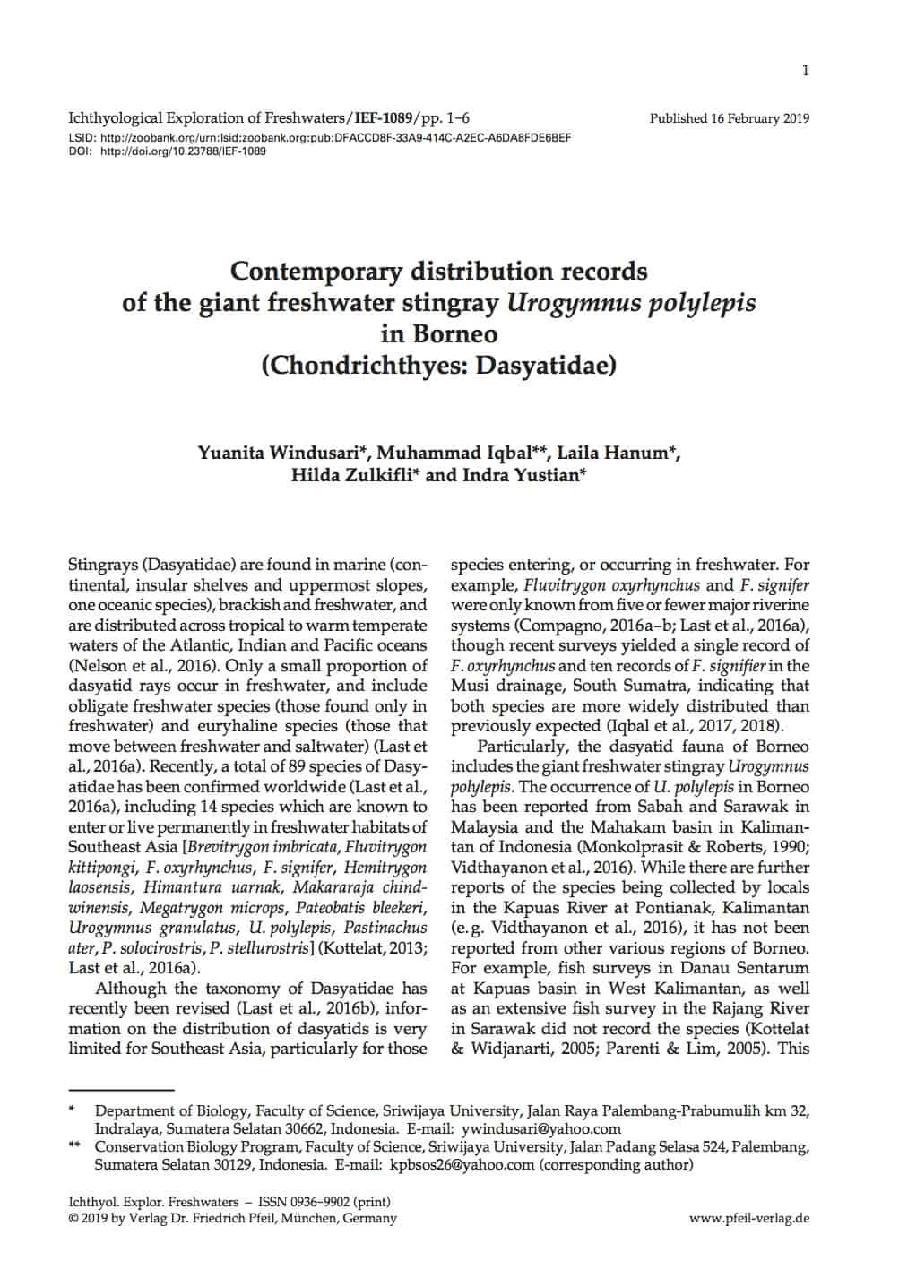 Contemporary distribution records of the giant freshwater stingray Urogymnus polylepis in Borneo (Chondrichthyes: Dasyatidae)