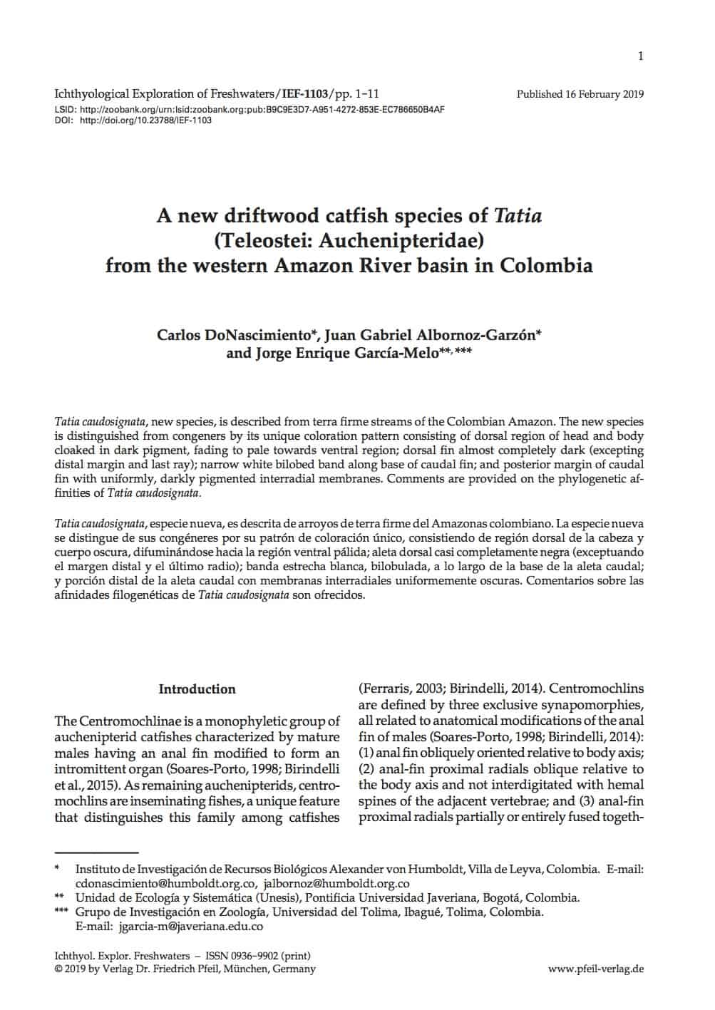 A new driftwood catfish species of Tatia (Teleostei: Auchenipteridae) from the western Amazon River basin in Colombia